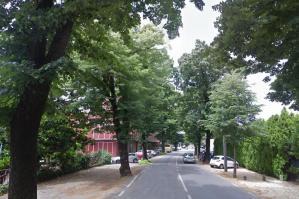 [Non c'è pace a Portogruaro per gli alberi]